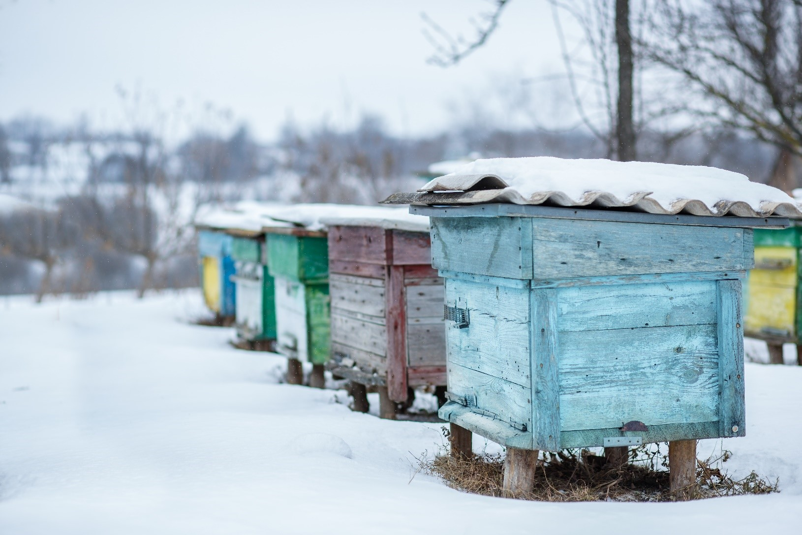 Group of beehives in winter covered with snow